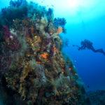 plongeur exploration sous-marine