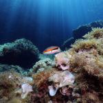 poisson fonds marins