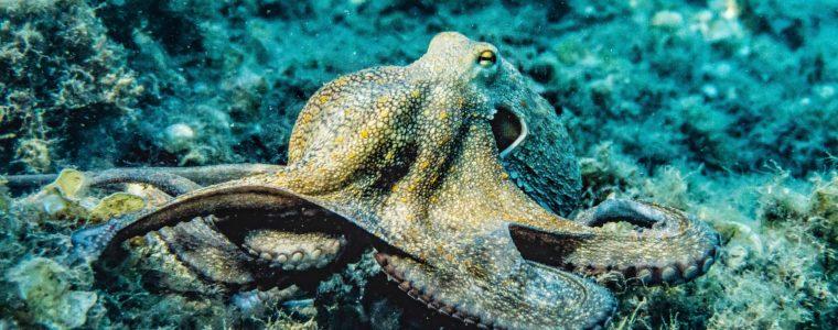 Des lois pour la protection des animaux marins
